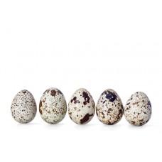 ביצי שליו טריות מגשית - פירות וירקות