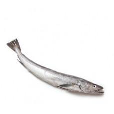 בקלה טרי (הייק) - דייג