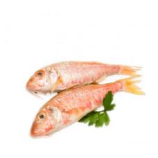 ברבוניה אדומה - דייג