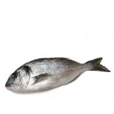 דניס - דייג