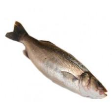 לברק - דייג