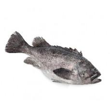 לוקוס - דייג