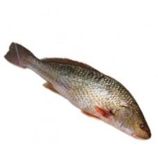 מוסר - דייג