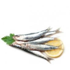 סרדינים (אם יש במלאי) - דייג